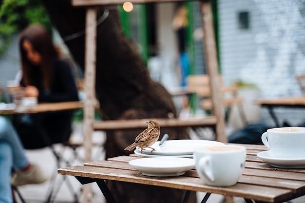 Птица в городе. воробей сидит на столе в кафе на открытом воздухе