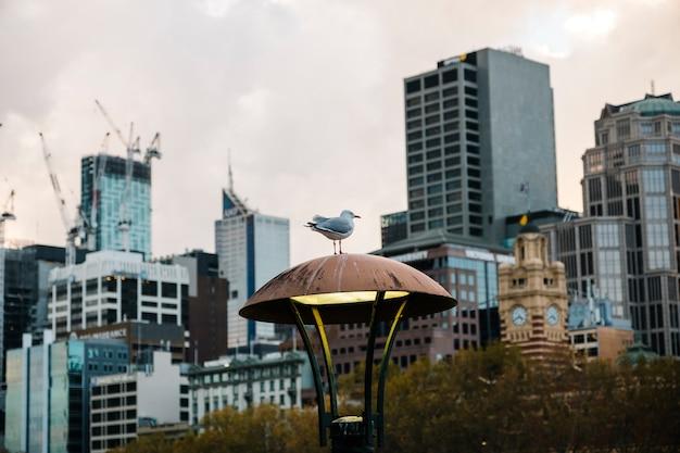 도시 위의 새