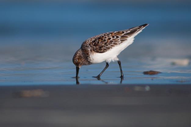 Птица на берегу