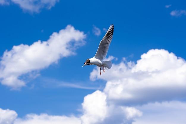 Птица в небе чайка летит в облаках по голубому небу