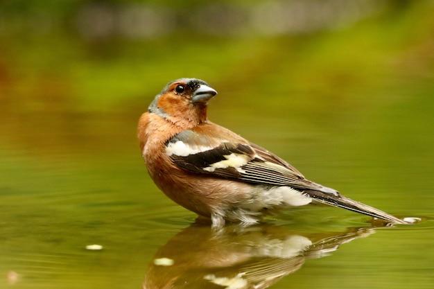 Птица в воде