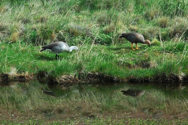 칠레 파타고니아 토레스 델 페인 국립 공원의 새