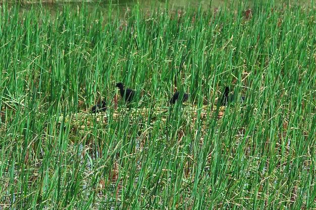 トレスデルパイネ国立公園、パタゴニア、チリの鳥