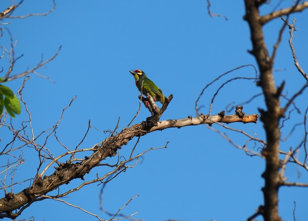 The bird is on a branch and blue sky.