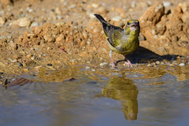 池の近くの鳥が水を飲む