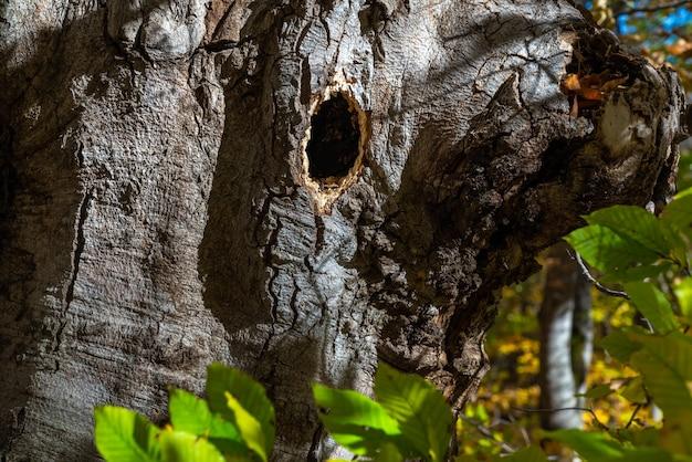 Птичье гнездо в стволе дерева