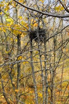 秋の森の鳥の巣
