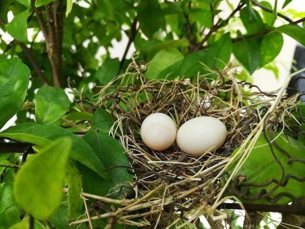 Птичье гнездо белых голубиных голубей яйца лежат на гнезде