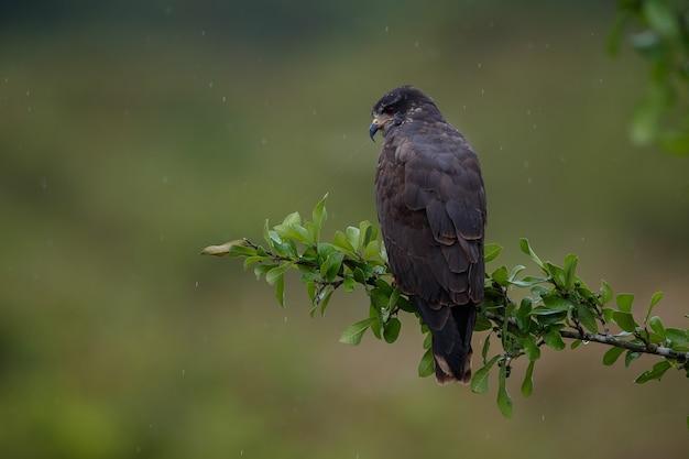 Птица пантанала в естественной среде обитания