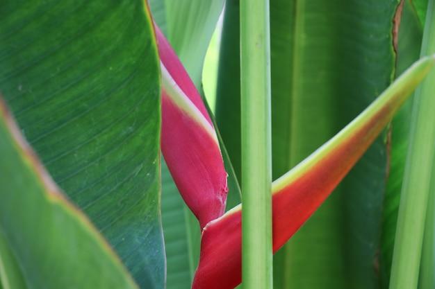 自然の中でカラフルな楽園の鳥鮮やかな花