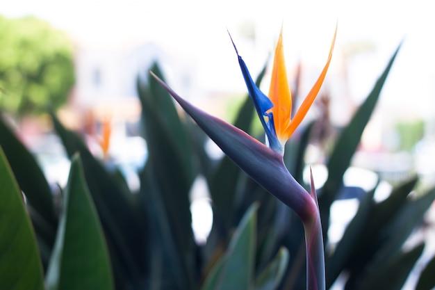 オレンジとブルーの花びらの鳥の楽園