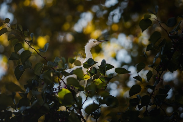 枝の上の鳥