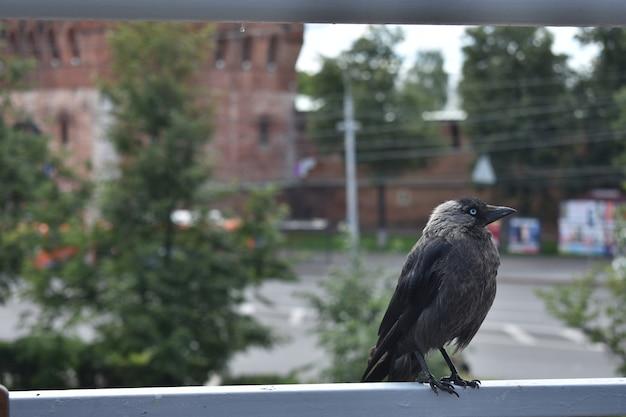 Птица на городской улице
