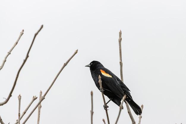Птица на ветке дерева