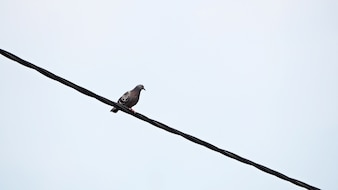 Bird on the cable.