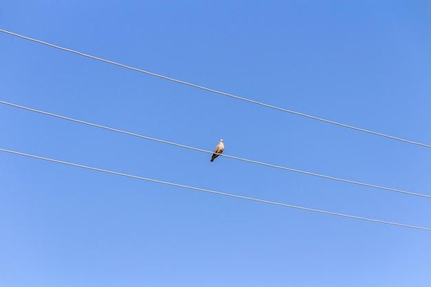 전선에 새 푸른 하늘