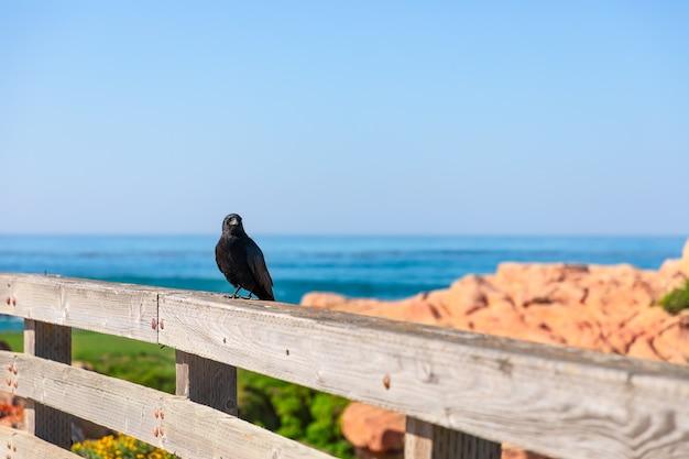 ペブルビーチのフェンスの上の鳥