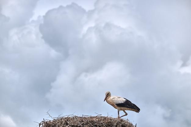 巣の上の鳥