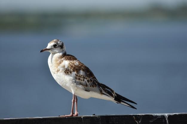 川岸のクローズアップの鳥