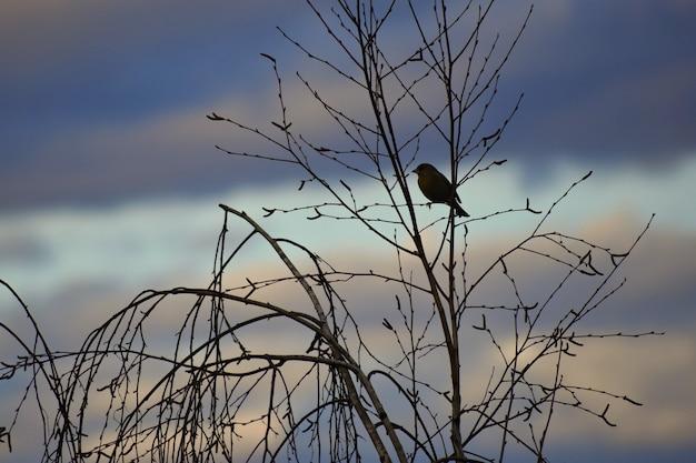 Птица на дереве. животное в природе. естественный красочный фон.