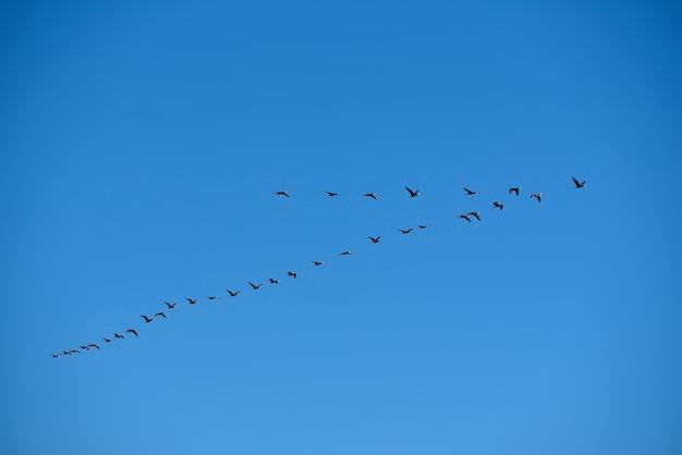 바다 위에 새. 새는 여름에 바다 위로 날아갑니다.