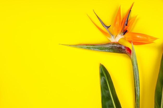 Bird of paradise flower strelitzia reginae, copyspace