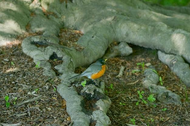 Птица сидит на корне дерева