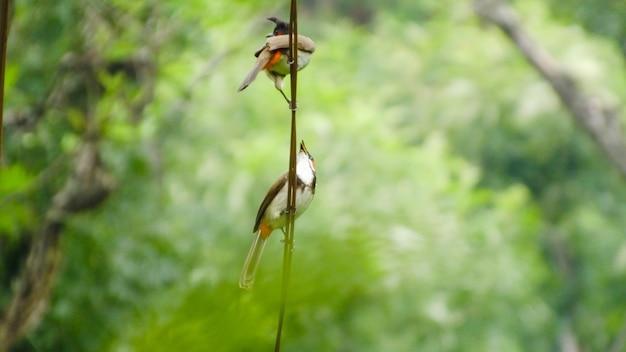 Bird_photography birdsキツツキキラ野鳥観察