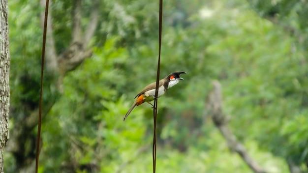 Bird_photography自然のキツツキ野生動物の鳥