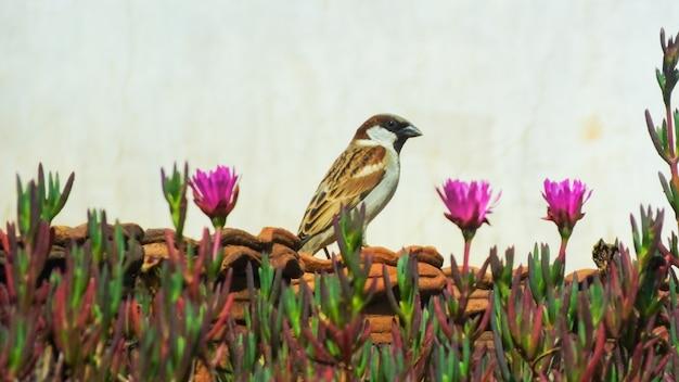 Bird_photography鳥のキツツキの愛鳥の野生動物