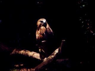 Bird of prey, cage
