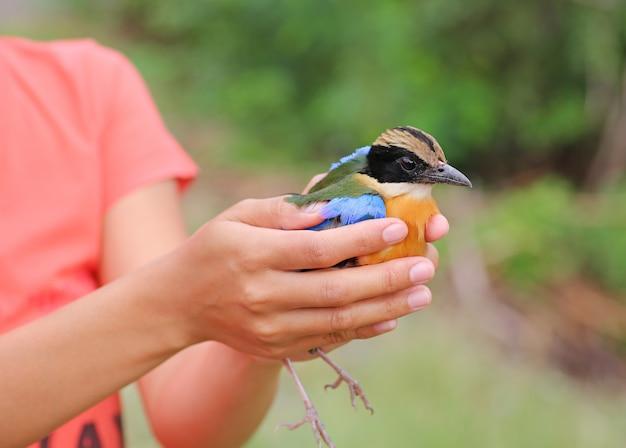 鳥は女性の手で鳥を放棄する