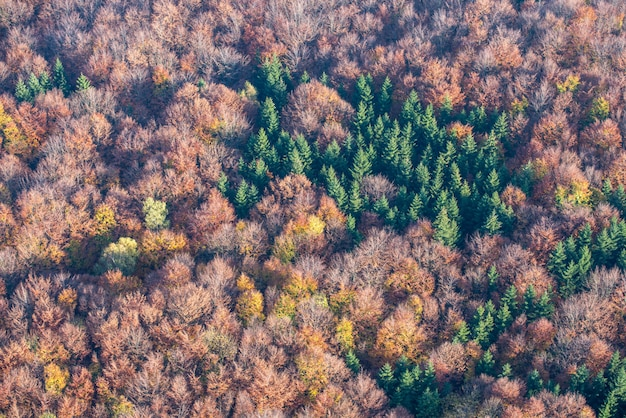 Bird's-eye shot of a beautiful yellow and red tree forest with scarce green trees