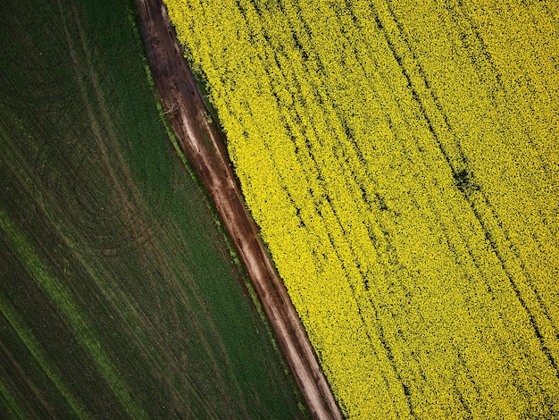 Bird's eye view from a drone of a passing canola crop, aerial view of spring rapeseed flower field.
