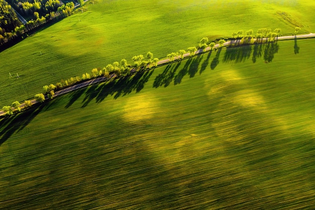 A bird's-eye view of a green field and a road in europe.nature of belarus.own green field at sunset and road.