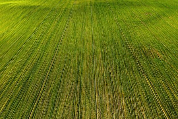 Вид с высоты птичьего полета на зеленое поле. посевная кампания в беларуси. природа беларуси. собственное зеленое поле на закате.