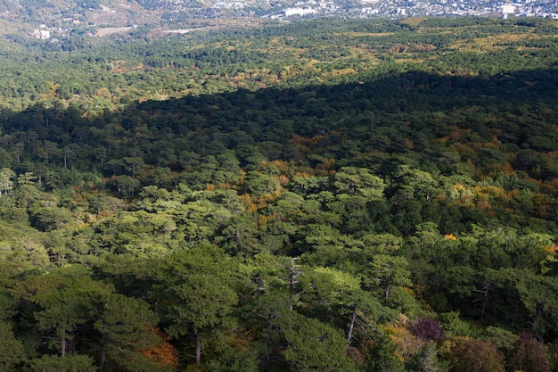 Вид на лес с высоты птичьего полета