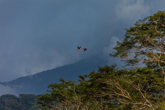 Bird s flying over tree s
