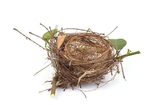 Птичье гнездо на белом фоне.