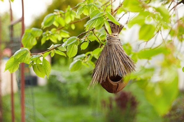 A bird's nest made from coconut shells and straw hangs on a tree in the garden.