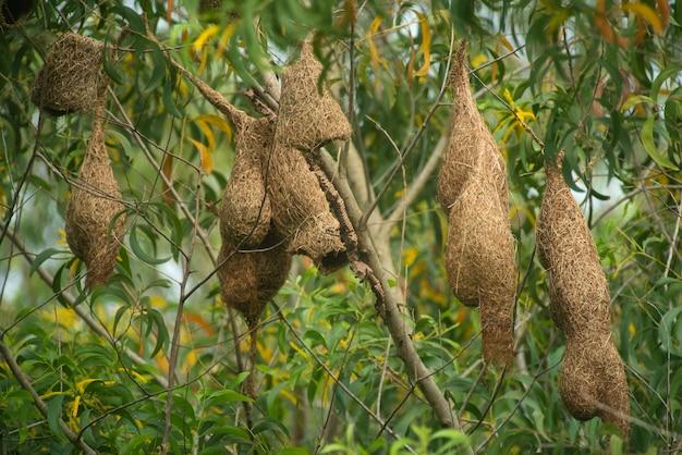わらから作られた鳥の巣