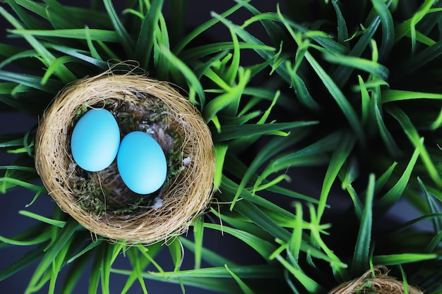 Bird's nest with eggs. willow branches and first greens. easter background. palm sunday. christian holiday. spring background.