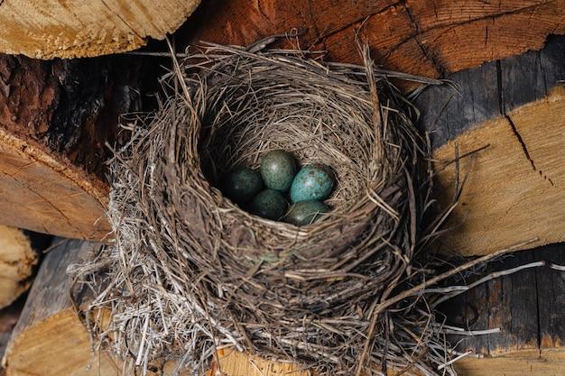 Птичье гнездо с зелеными яйцами внутри. птица свила гнездо в сарае.