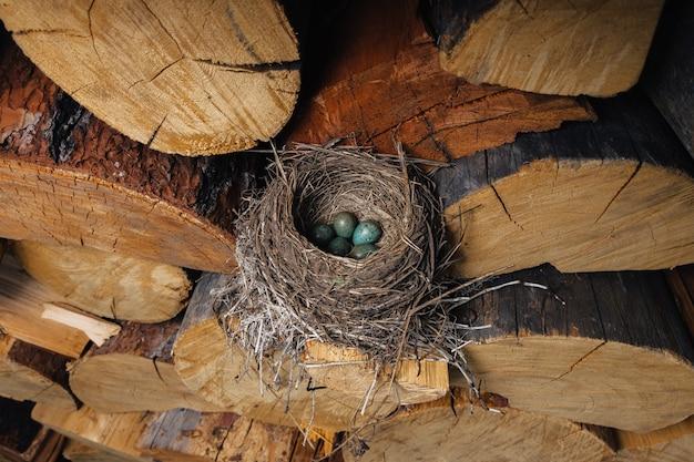 내부에 녹색 계란이 있는 새 둥지. 새는 숲속에 둥지를 틀었습니다.