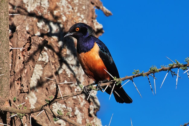 A bird on safari in kenia and tanzania, africa