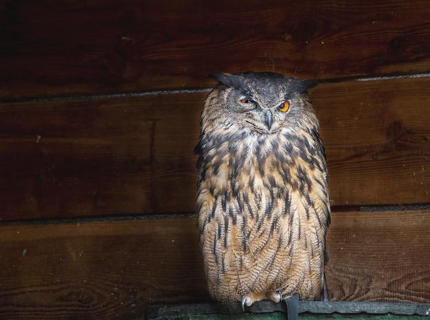 Bird sanctuary in the german city of bavariaowl in a bird sanctuary in the german city of bavaria