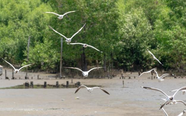 Птица чайка летает в bangpoo resort samutprakarn thailand