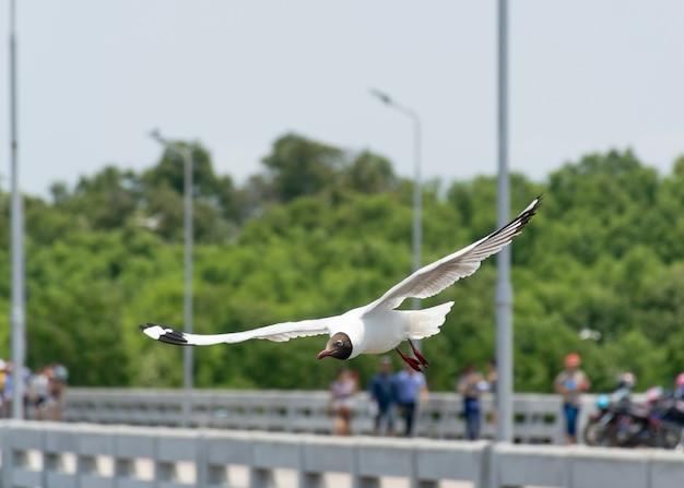 Bird seagull fly at bangpoo resort samutprakarn thailand