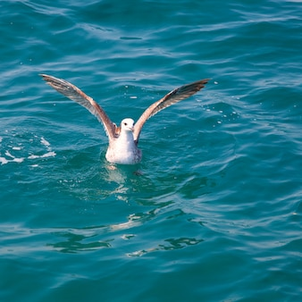 Bird seagull on sea water in ocean