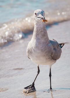 鳥のカモメが浜辺を歩きます。